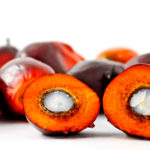 Red palm Fruit, Red Palm Oil, health benefits of Red Palm Oil, Red Palm Oil is 50% saturated, Red Palm Oil have carotene that is good for brain