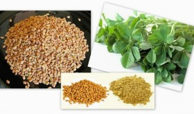 Fenugreek Seed (Methi Dana) Benefits in Diabetes, Breastfeeding, Hair care, skin care, acne/scars, cholesterol, weight loss, cancer, child birth, Methi powder