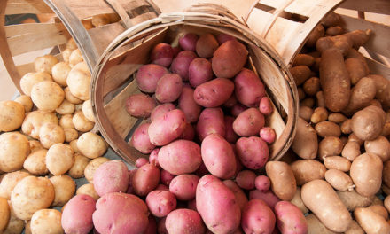 Health Related Myths About Potatoes