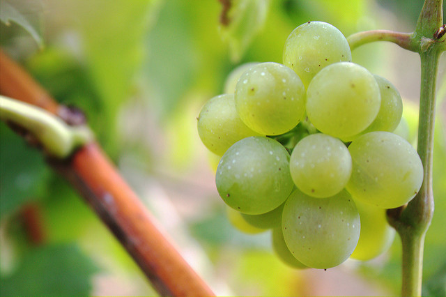 Are Grapes Good or Bad For Constipation